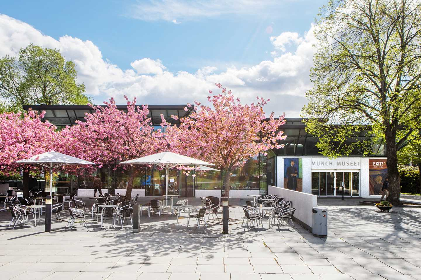 Munchmuseet at Tøyen in May 2019, with the new entrance section from 1994, and the beautiful Japanese cherry trees by the café's outdoor seating area. Photo @ Munchmuseet