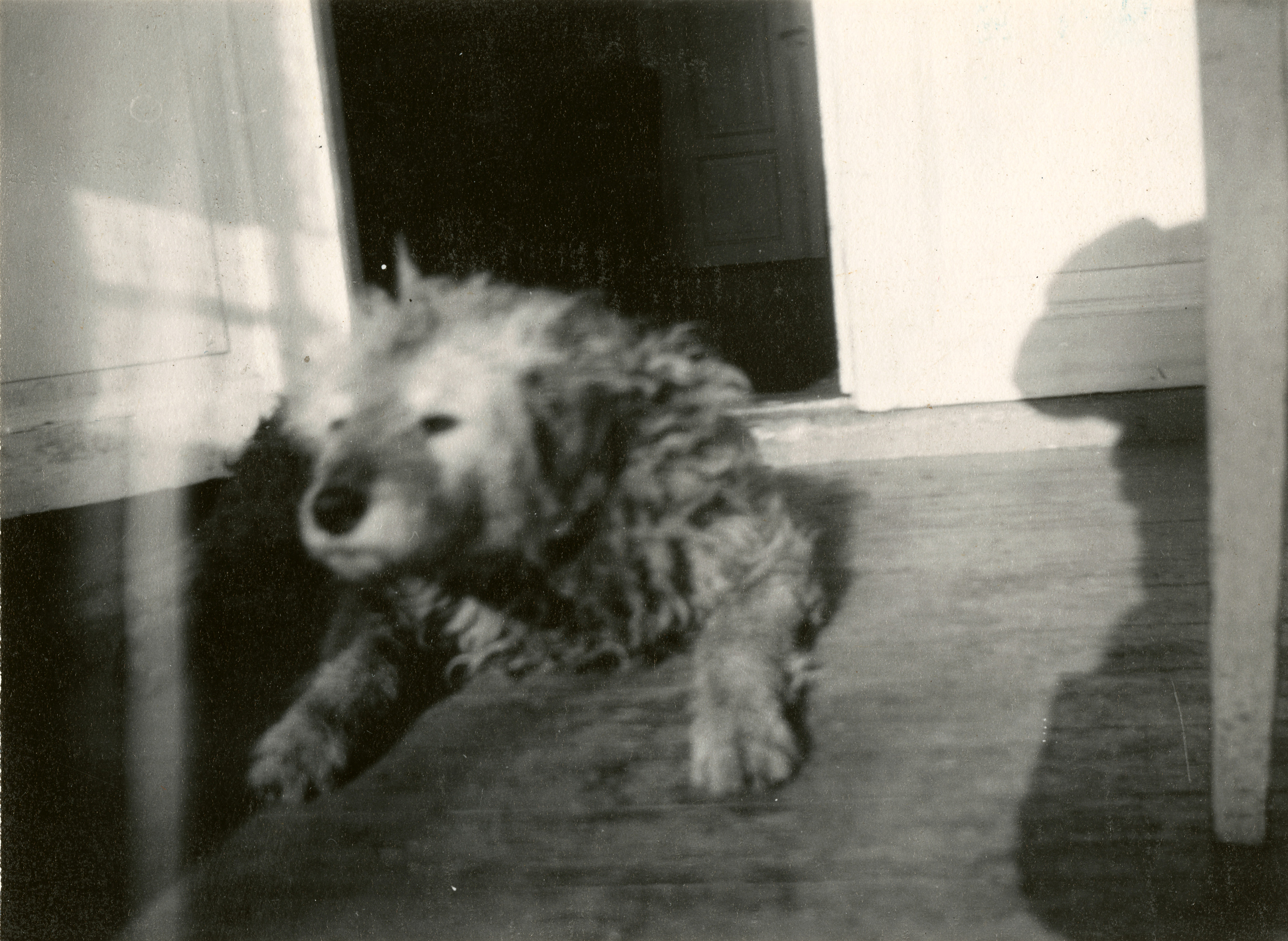 "Edvard Munch: Munch's Dog ""Fips"". Silver Gelatine, 1930. Photo © Munchmuseet"